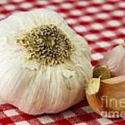 Garlic Art Print by Blink Images