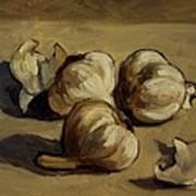 Garlic Art Print by Deborah Allison