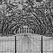 Gateway To The Old South Bw Art Print by Steve Harrington