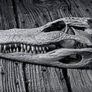 Gator Black And White Art Print