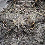 Gator Eyes Art Print