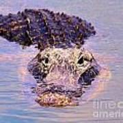 Gator Looking  Art Print