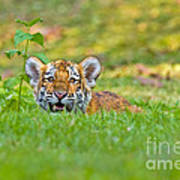 Gauging The Distance Print by Ashley Vincent