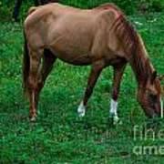 Gazing Horse Art Print