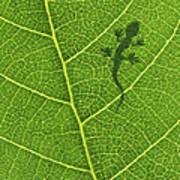 Gecko Art Print by Aged Pixel