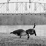 Geese By The Ohio Art Print