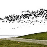 Geese Art Print by Frits Selier