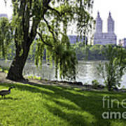Geese In Central Park Nyc Art Print