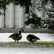 Geese In Snow Art Print