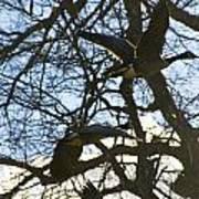 Geese In Twlight Sky Art Print