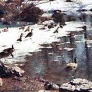 Geese On An Icy Pond Art Print