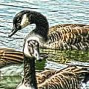 Geese On The Pond II Art Print