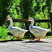 Geese Strolling In The Garden Art Print by Tracie Kaska