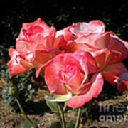 Gemini Tea Rose Art Print