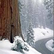 2m6836-generals Highway In The Giant Sequoias Art Print