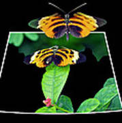 Gentle Butterfly Courtship 01 Out Of Bounds Art Print