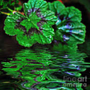 Geranium Leaves - Reflections On Pond Art Print
