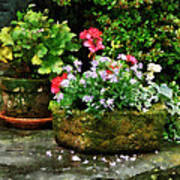 Geraniums And Lavender Flowers On Stone Steps Art Print