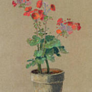 Geraniums In A Pot  Art Print