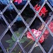 Geraniums Under Glass In Wales Art Print