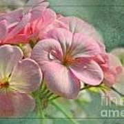 Geraniums With Texture Art Print