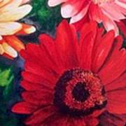 Gerber Daisies In Bloom Art Print