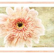 Gerber Daisy 1 Art Print