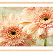 Gerber Daisy 2 Art Print