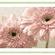 Gerber Daisy 3 Art Print