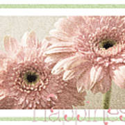 Gerber Daisy Happiness 3 Art Print