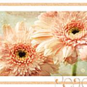 Gerber Daisy Peace 2 Art Print