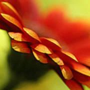 Gerbera Daisy Flower II Art Print by Natalie Kinnear