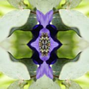 Gerbera Flower Art Print