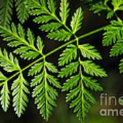 Gereric Vegetation Art Print