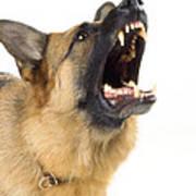 German Shepherd Dog Art Print