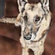 German Shepherd On Couch Art Print