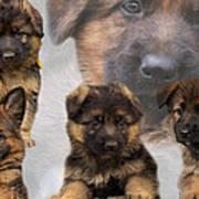 German Shepherd Puppy Collage Art Print