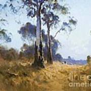 Ghost Gum At Kangaroo Flat Art Print