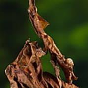 Ghost Or Dead Leaf Mantis Art Print