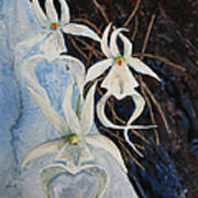 Ghost Orchid Blooming Art Print