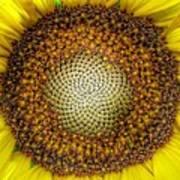Ghost Sunflower Art Print
