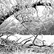 Ghost Tree 1 Of 3 Art Print