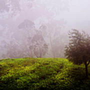 Ghost Tree In The Haunted Forest. Nuwara Eliya. Sri Lanka Art Print