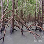 Ghostly Mangroves Art Print