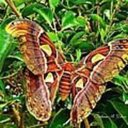 Giant Moth Art Print