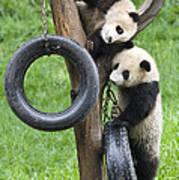 Giant Panda Cubs Art Print