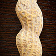Giant Single Peanut  Art Print