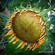 Giant Sunflower Drama Art Print