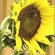 Giant Sunflower With Buds Art Print