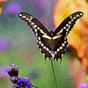 Giant Swallowtail Butterfly Photo-painting Art Print